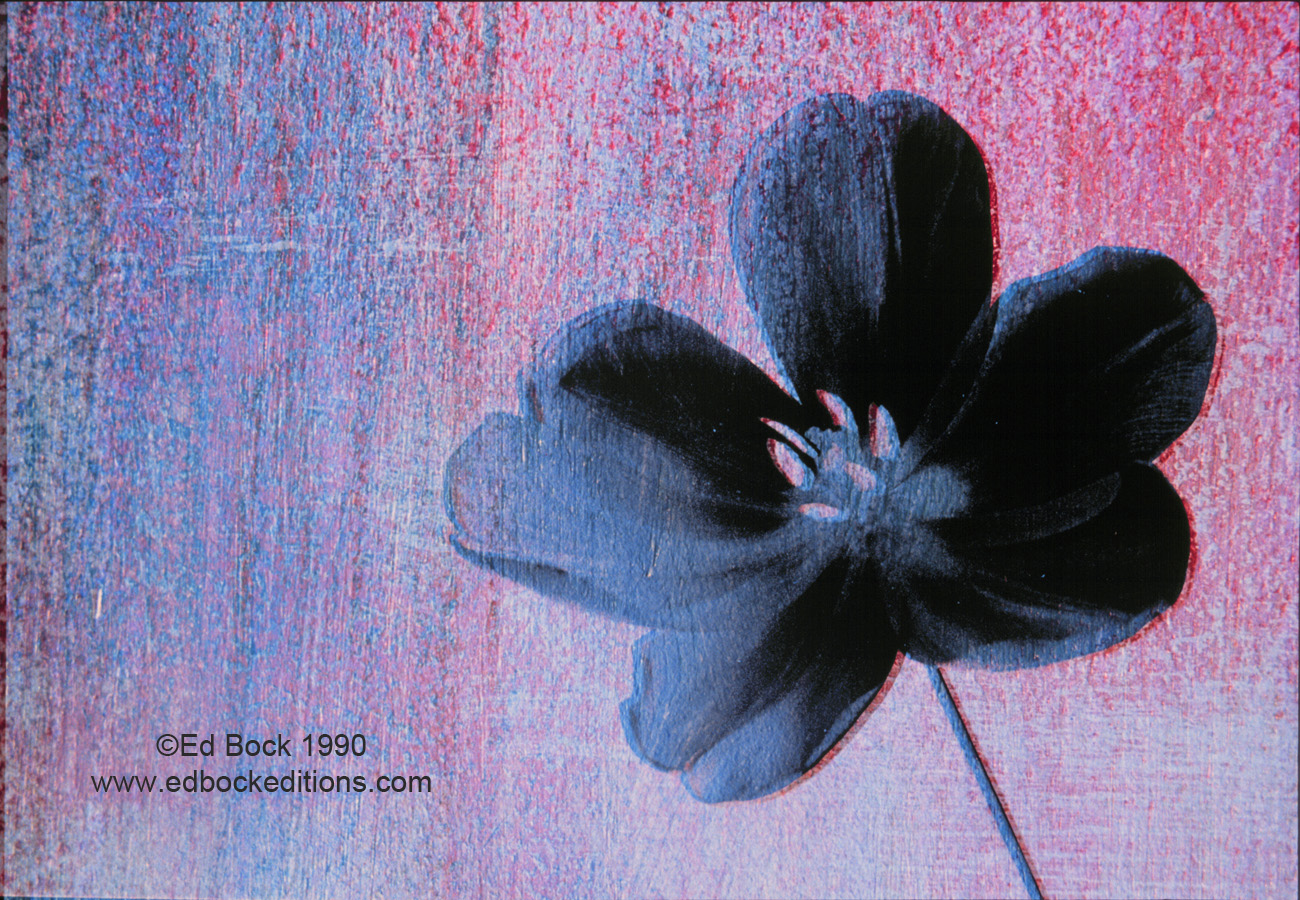 Black, Flower, magenta, textured, Mixed media, art, acrylic, watercolor, fine art, prints, artwork, collage, poster, photo, canvas, giclee, painting, contemporary, modern, abstract, colorful, art prints from Ed Bock, EdBockEditions